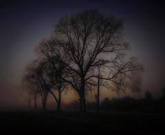 Eerie Morning Mist (Kevin_Jeffries) Tags: misty fog trees morning light nikon d7100 nikkor sunlight landscape eerie kevinjeffries mood atmosphere winter
