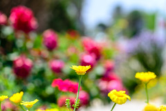 My Colourful World (George Plakides) Tags: flowers colour joy bokeh