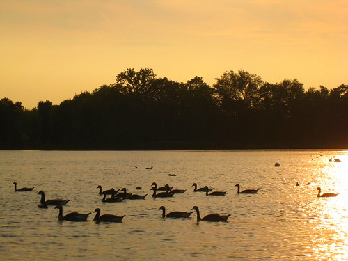 sunset ducks, Provinciaal Domein Kessel-Lo