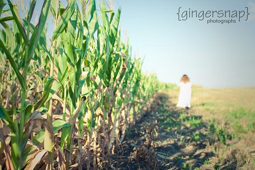 corn13
