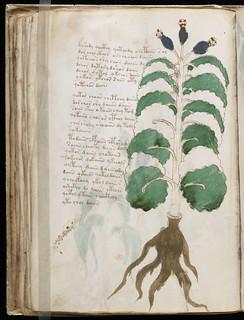 Voynich Manuscript Page073.jpg