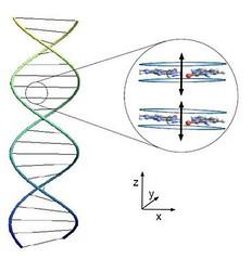 ADN entrelazado