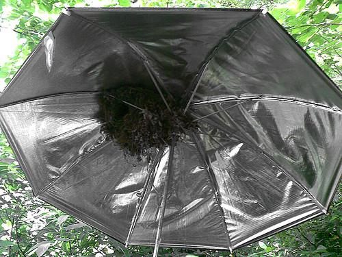 Nido paraguas 01