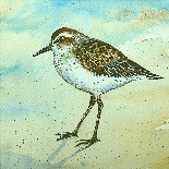 Sandpiper Watercolor Original Painting