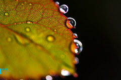 (muha...) Tags: new summer india holiday macro leaf nikon ant newborn 60mm maldives munnar nikond700