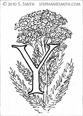 Y is for Yarrow