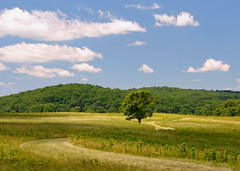 Valley Forge (Kevin Benedict Photography) Tags: travel trees summer philadelphia landscape nikon meadow fields paths roads valleyforge photobenedict