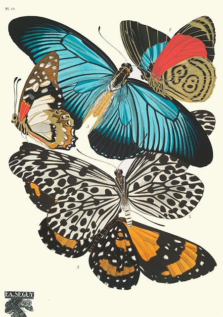 009-Papillons vingt planches en phototypie coloriees..1928- Eugene Alain Seguy