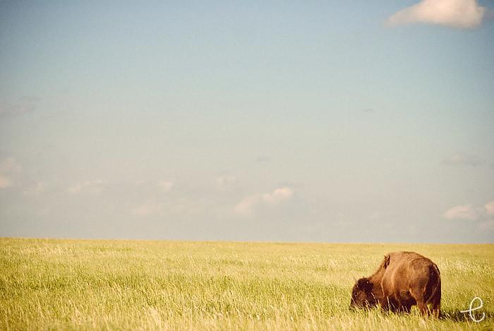 buffalo road trip