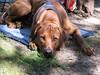 GoSniff, Juni 2010 (Cave Cani) Tags: galerie seminar hunde hundeschule suchspiel hundetraining hundeerziehung nasenspiel nasenwelt gosniff nasenarbeit sucharbeit hundetrainingteamarbeit