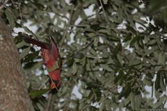 2701 Cardinal hanging out