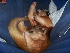 Eldorado sleeping