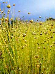 Magic (C-Smooth) Tags: light macro green art nature beauty field lino valtellina csmooth aboveandbeyondlevel1 aboveandbeyondlevel2 aboveandbeyondlevel3 stefanocabello