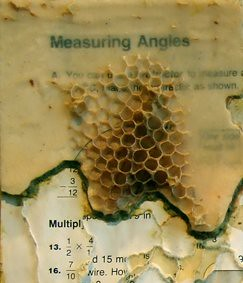 Bees, maths and printing
