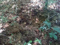 Deep Rooting 3