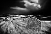 Landscape with hay bales (Effe.Effe) Tags: bw monochrome haybales rotoballe