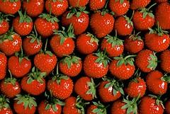 novastock5764 (Gerard Fritz) Tags: red wallpaper green horizontal healthy strawberry berry berries bright sweet strawberries nobody fresh rows round getty sour fritz brightness vitamins gerard brightly groupofobjects stco aac6369jpg novastock gerardfritz