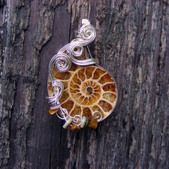 "NAUTILUS ~Brown Ammonite Fossil Silver Wire Wrapped Pendant Necklace. (Care More) Tags: brown ammonite fossil tigereye shells nautical ""wire wrapped"" ""wirewrapped"" jewelry necklace pendant gemstone stone metal ""gold wire"" ""silver ""copper gold silver copper gunmetal wire handmade handcrafted unique ooak beaded ""sterling silver"" nature natural dramatic earthy etsy wrapped metalwork beads swirly caremore ""care more creations"" cabochon cabochons stones semiprecious ""semiprecious stone"" swirls spirals spiral healing metaphysical fashion female stylish bronze artfire caremorecreations"
