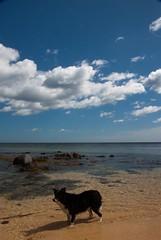 8 July 2010 (Copperhobnob) Tags: sea summer sun seaweed beach nature water clouds landscape countryside sand rocks waves aberdeenshire dunes buchan paddling stcombs polariser polariserfilter