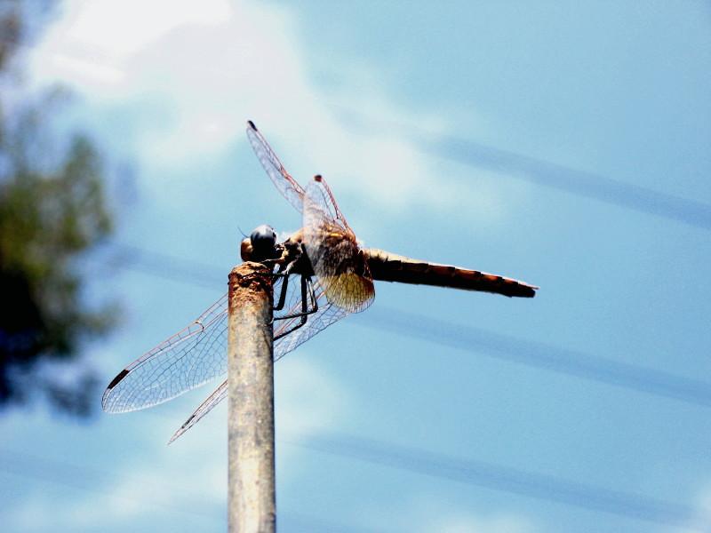 04-07-2010-libelle