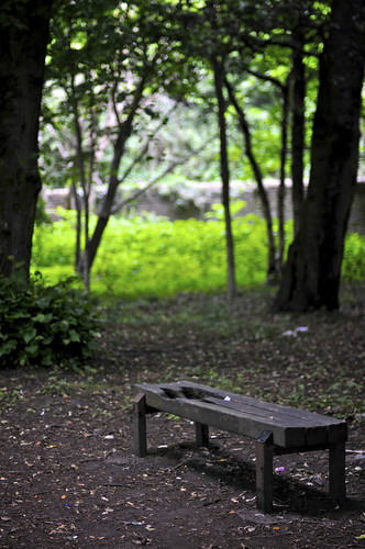 Bench Under The Trees In Bute Park