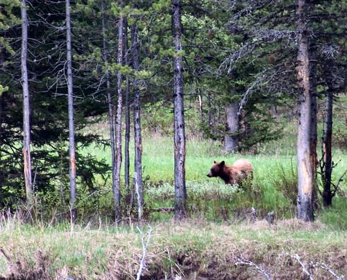 Yellowstone 04