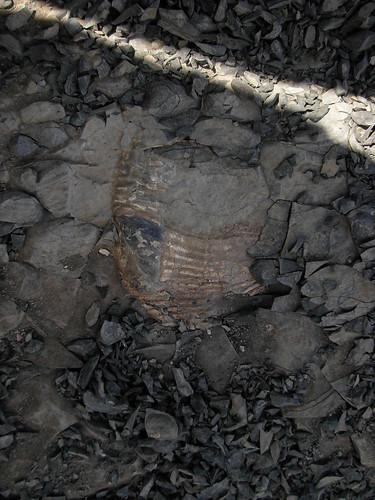I spy a fossil!