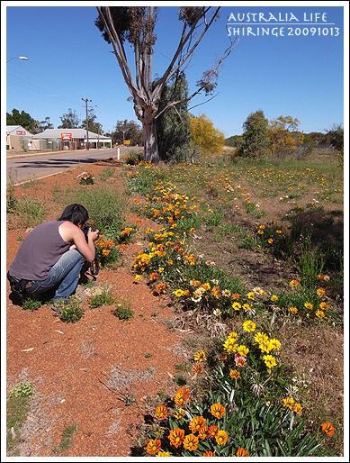 Day 2-Wildflower way