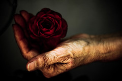 Touch of Love (A.C.Thamer) Tags: baby blur love rose contrast canon hand bokeh mother 50mm18 40d thamerphotography acthamer alexthamer