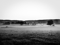 Na louce II / At Meadows II (Weruska.K) Tags: tree fog dawn soft republic czech south czechrepublic intimate bohemia strom gentle republika southbohemia jin echy esk eskrepublika mlha svtn jinechy jemn southbohemita