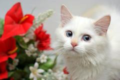 هل تعلم عن الحيوانات???????????????? 4801264141_f881d93fa