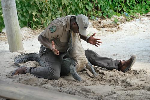 El show del ranger y el cocodrilo