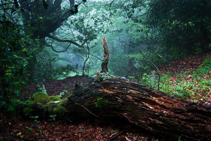 El suelo del Bosque