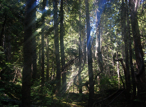 Vancouver - Cypress Mountain, Eagle Bluffs Hike (24)