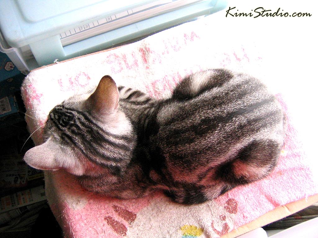 miko cat