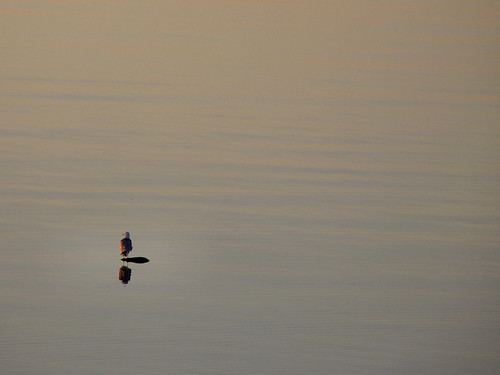 Sunrise Seagull - Mackinaw City/St. Ignace, Michigan 2010