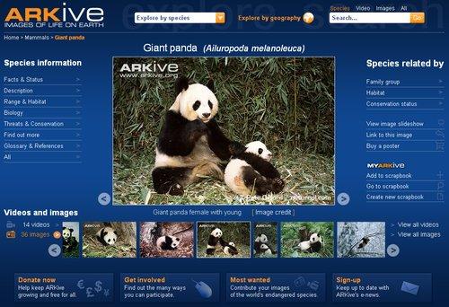 Arkive 2 Panda
