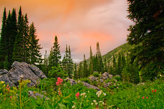 Albion Basin Wildflowers & Sunset