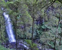 Erskine Falls (Ken'sKam) Tags: nature waterfall rainforest victoria waterfalls greatoceanroad lorne victoriaaustralia erskinefalls nikond90 lorneaustralia