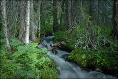 skogsbäcken Ammeråns naturreservat (Anders Mohlin) Tags: sommar