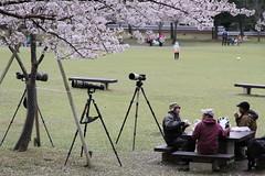 Me is Lens envy (Marquisde) Tags: park friends men japan lens table lunch japanese picnic wildlife tripod streetphotography photographers cameras 7d nara envy lenses canonefs1585mmf3556isusm
