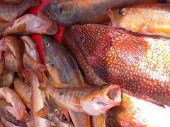 Cofradía de pescadores Santurtzi