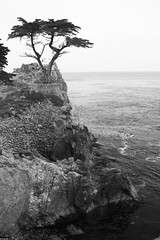 The Lone Cypress (segamatic) Tags: ocean california bw cliff tree canon landscape eos pebblebeach lone cypress canontse45mmf28 5dmarkii