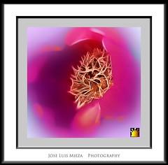 Nido floral (Jose Luis Mieza Photography) Tags: flowers flores flower fleur fleurs flor benquerencia florews reinante jlmieza reinanteelpintordefuego joseluismieza