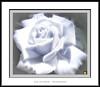 Me ofrezco a ti (Jose Luis Mieza Photography) Tags: flowers flores flower fleur fleurs flor benquerencia florews reinante jlmieza reinanteelpintordefuego joseluismieza