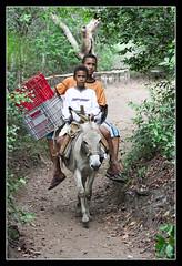 Lotação (Denilton Santos) Tags: boys bahia jumento terra garotada