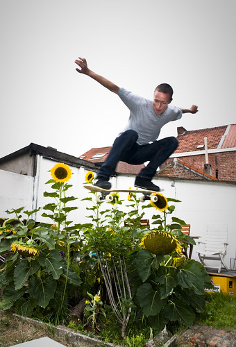 tomme ollie