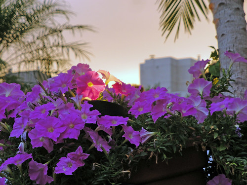 230 5th roof top flowers