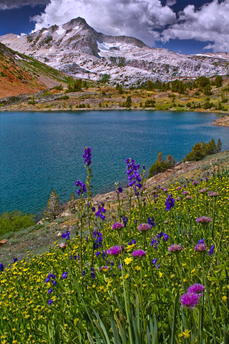 Wild Flowers Over Saddlebag Lake