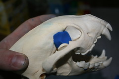 Skull w/putty in eye
